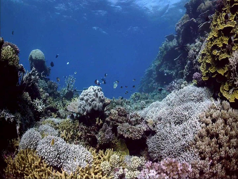 海底世界;; 来自vista梦幻桌面