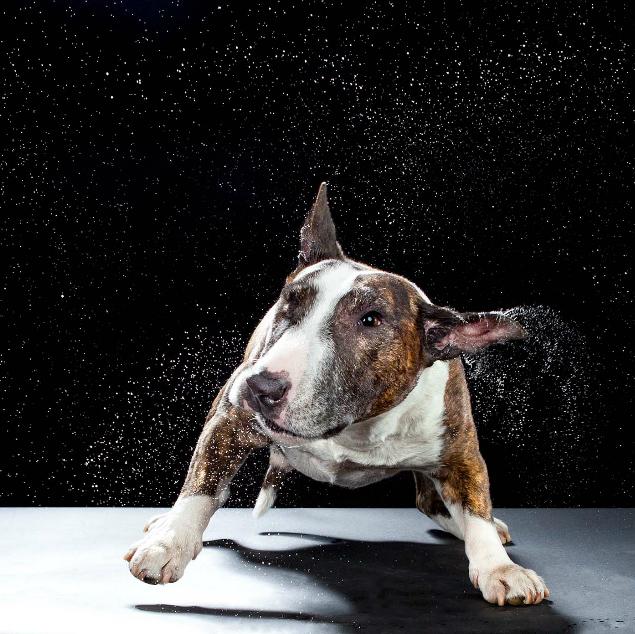 狗头拍衰狗 美女摄影师有趣的动物摄影 组图