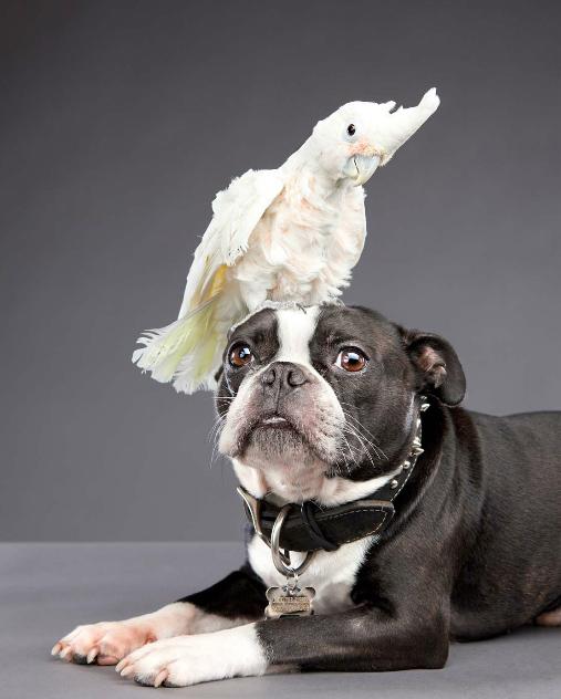 Carli Davidson,美国女摄影师,专业拍摄宠物,拥有商业及纪实摄影经历。对艺术与动物很热爱,她在摄影的同时,还选择了在俄勒冈州动物园做动物保健师的工作,也为当地的动物救援机构做义工摄影师。