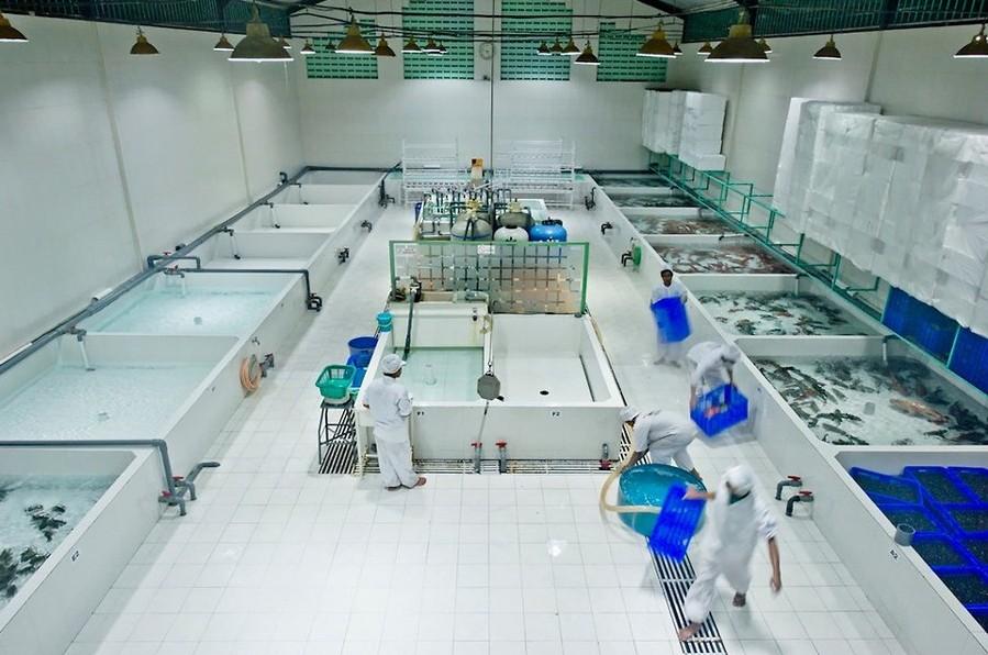 石斑鱼随后被运到巴厘岛的一个储藏设施