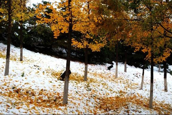 秋冬与风景的合照