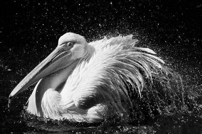 动物百态众生相 精彩动物摄影作品欣赏 组图