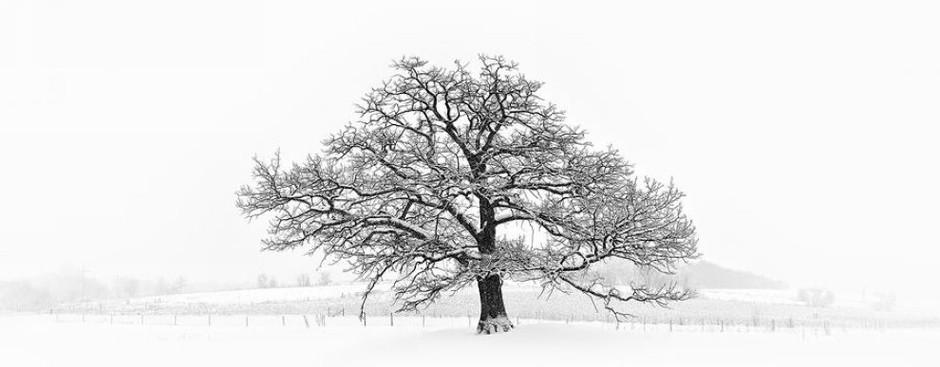 树林背景简笔画内容图片展示_树林背景简笔画图片