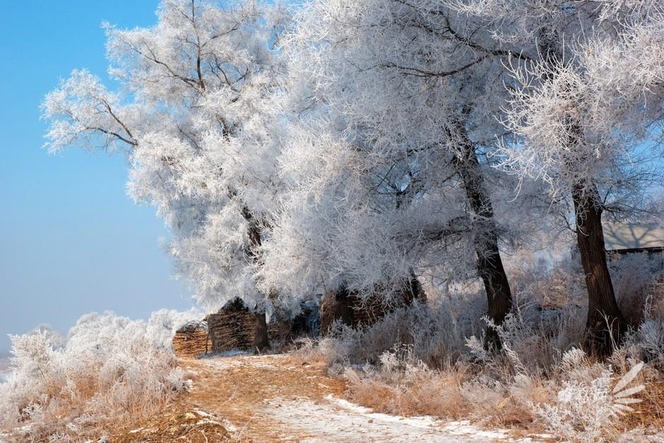 寒冬:大雪纷飞何所似 摄影佳作告诉你套图-第4张