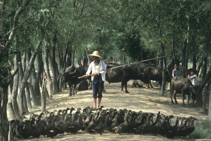 80年代中国-80年代的朝鲜与中国:日本摄影师作