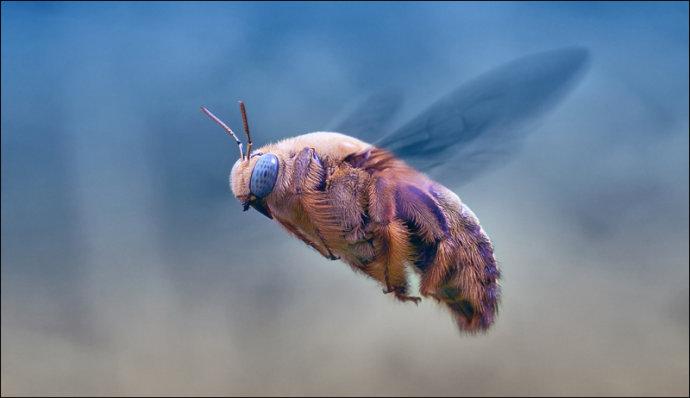 我们常见的以昆虫为主题的摄影作品,大多是微距题材为主。把昆虫身体的细节构造拍摄的清晰生动。或是捕捉动态,给人以微观世界的视觉冲击力。这组昆虫作品,在摄影师的描绘中透着几分唯美和灵动,加上色彩的修饰,让我们感受到另一种不一样的美。