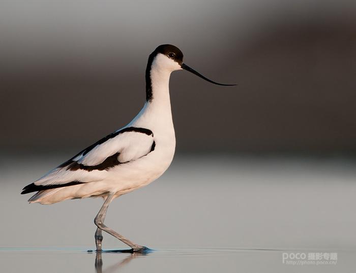 傲然的鸟姿