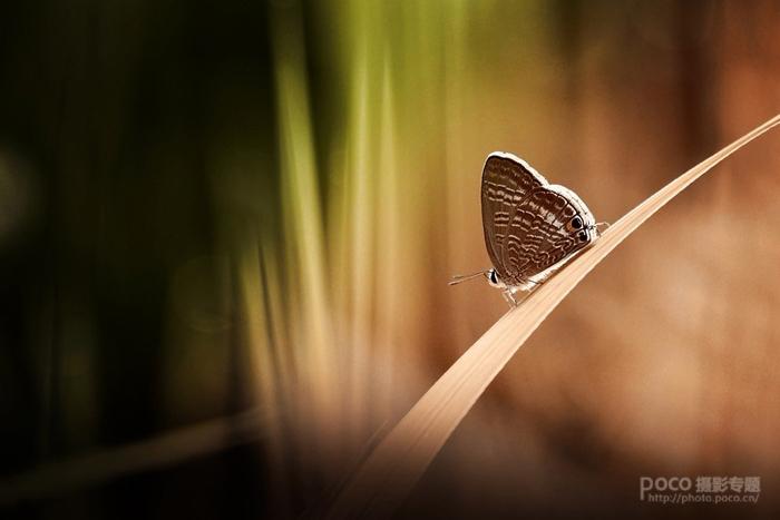 静恬的蝴蝶