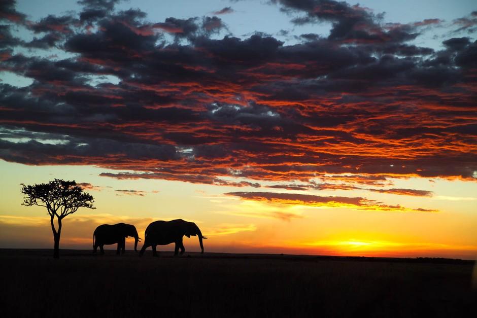 32肯尼亚马赛马拉野生动物保护区-你能全走遍吗