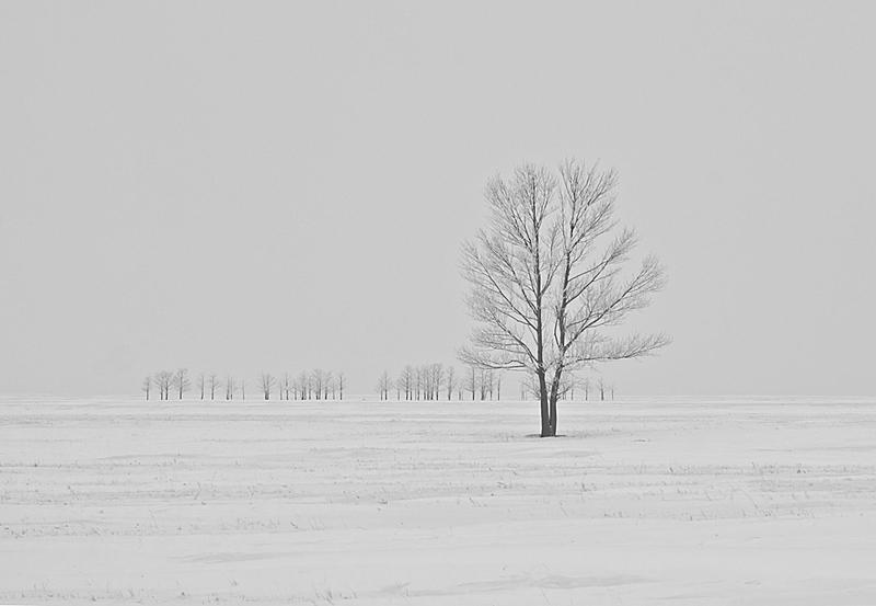 优秀奖 大树与小树 作者:青青摄影