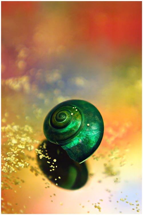 """【美图欣赏】摘录""""感动世界的静谧-- 让你重新认识静物摄影 """" - A加佳 - A加佳的学习小屋"""