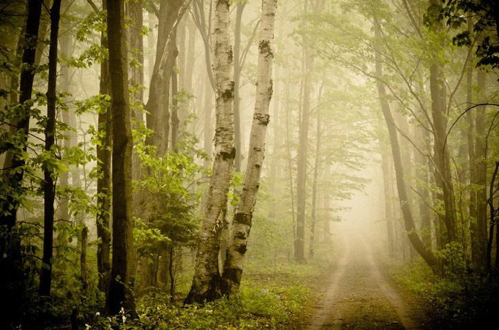 美国俄亥俄州的梦幻森林套图-第1张