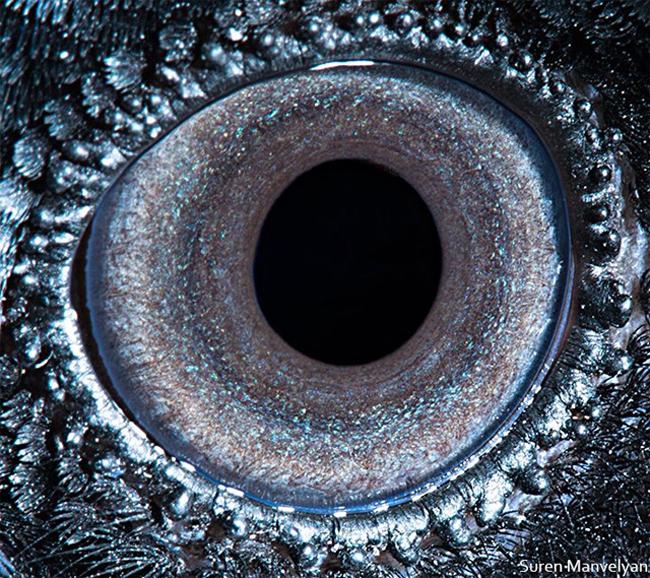 眼睛里的奇趣景象:神奇的动物瞳孔摄影 组图