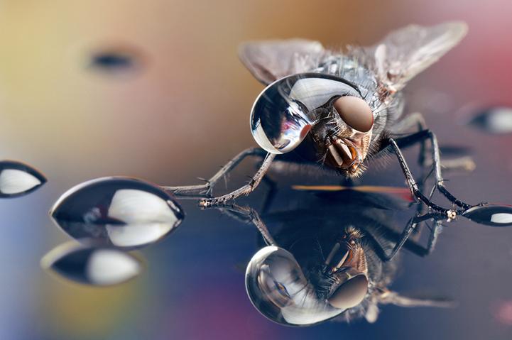 微小的昆虫那美妙的纹身尽现眼前,只要你仔细看,甚至可以发现小虫子的