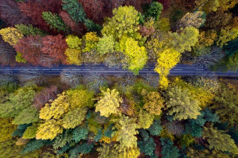 秋季美景 空中摄影师航拍波兰绝美森林 组图