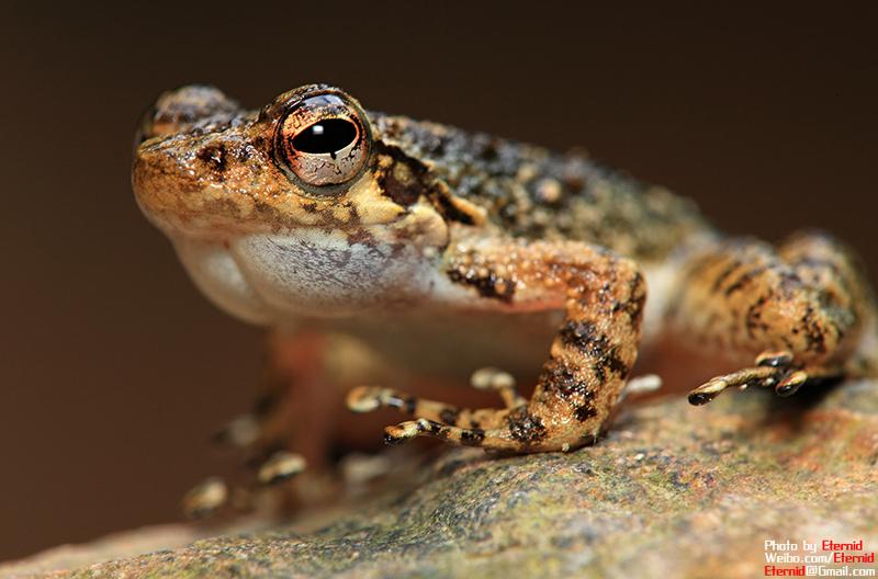 摄影师郑洋的两栖爬行动物摄影作品套图-第17张