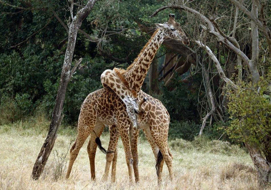阳光灼热的地方 非洲大陆狂野的动物世界 组图