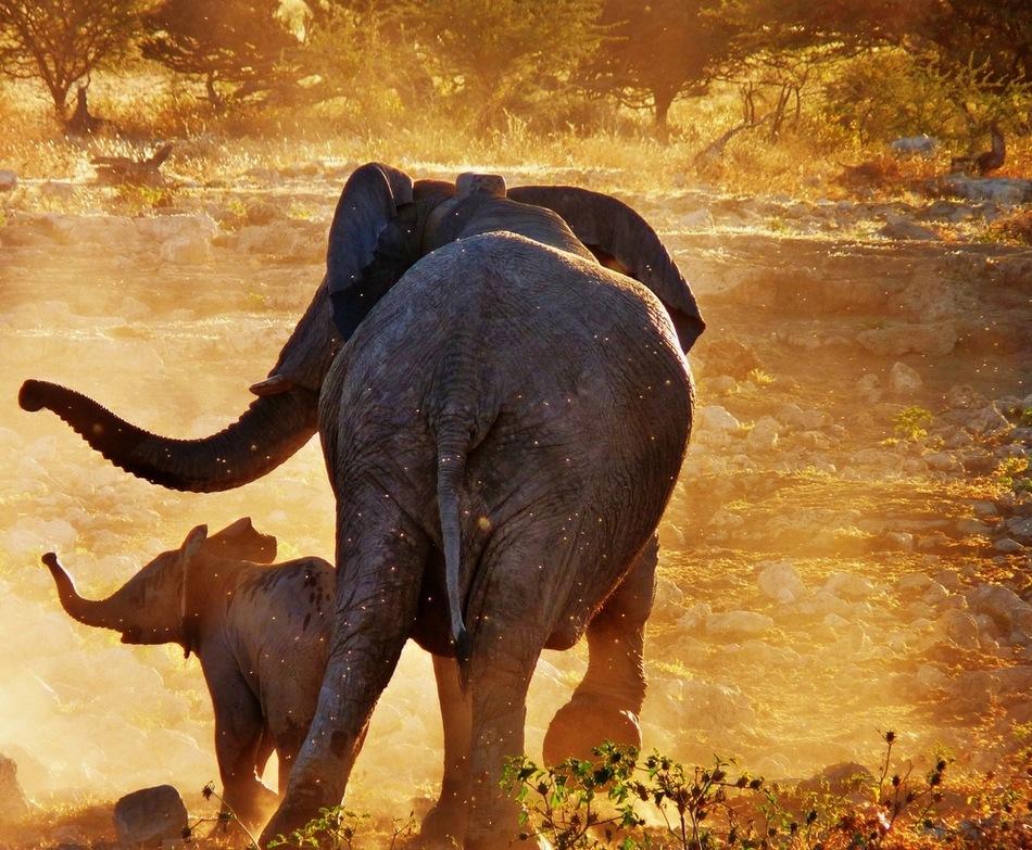 非洲大陆狂野的动物世界套图-第1张