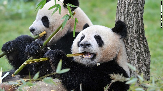 "cnn旅游频道全球最萌动物榜单新鲜出炉,排名前20的萌物们各有各的""萌"""