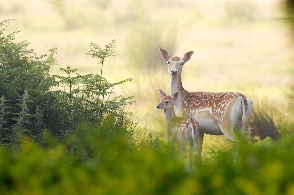 迷雾森林里的鹿精灵套图-第39张