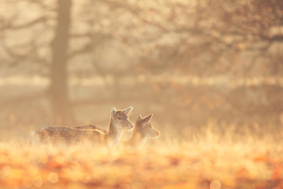 迷雾森林里的鹿精灵套图-第7张