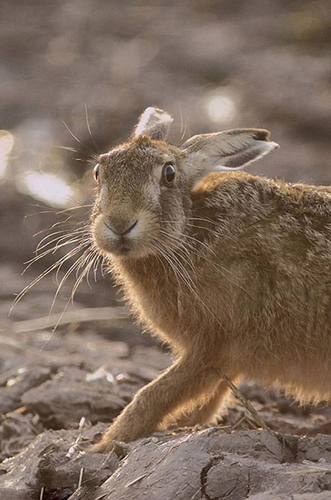 2013年英国野生动物摄影大赛获奖作品套图-第2张