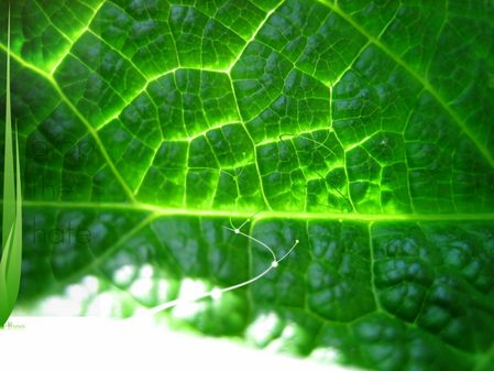 Windows Vista 绿色的酷系列主题壁纸