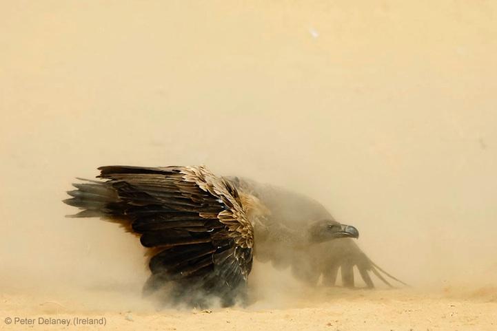 2013年度野生动物摄影大赛获奖作品集 组图