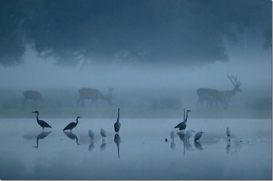 【光影中国】 69 摄影资讯 69 美来自和谐:充满意境的野生动物