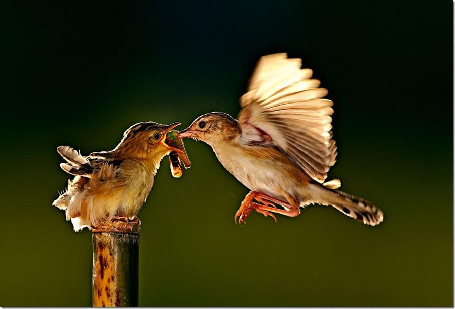 美来自和谐:充满意境的野生动物摄影