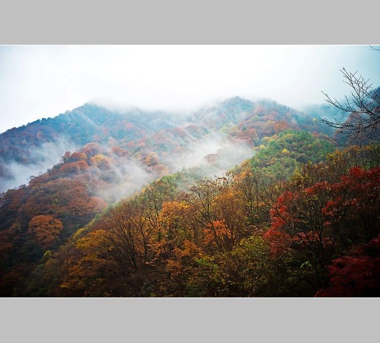 山林风景七律i诗