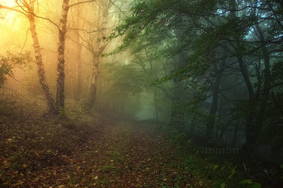 我最喜欢的森林风景