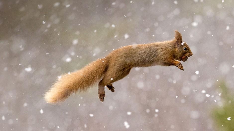 好看的雪中动物图片大全