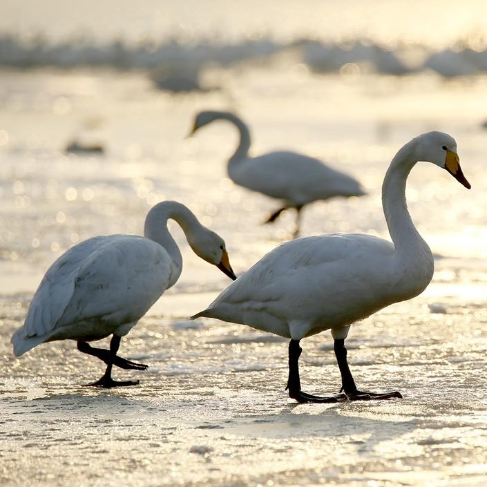 动物的走路姿势