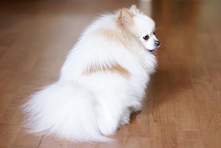 可爱小动物 索尼α100拍宠物的三种秘籍
