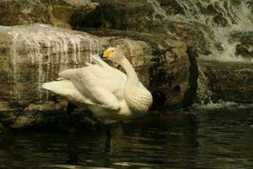 动物园水禽动态简笔