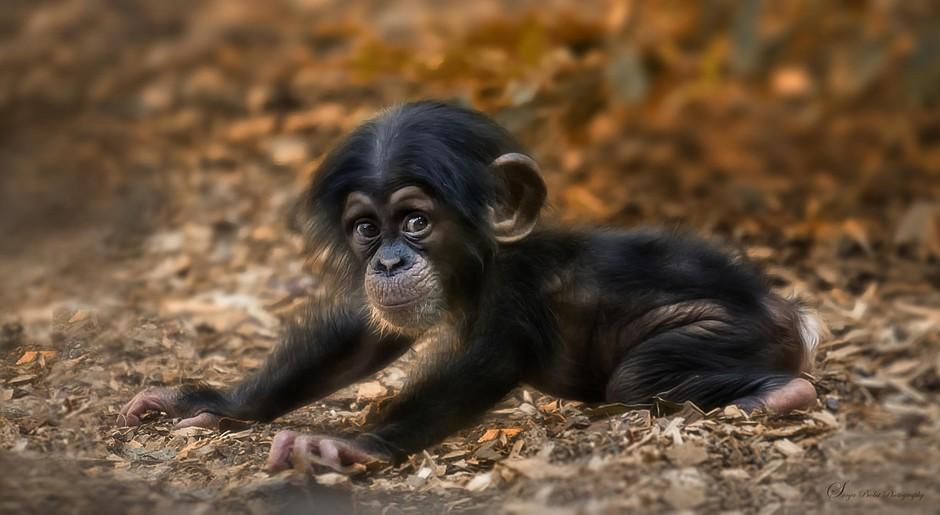 镜头下的小动物可爱萌态实拍