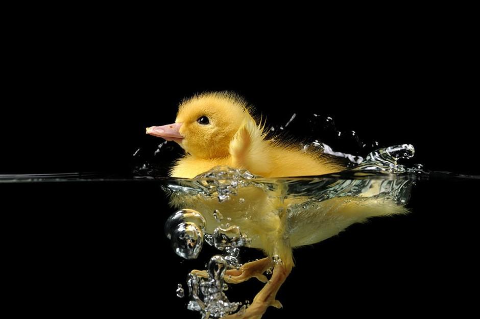 镜头下的小动物可爱萌态实拍 - 千奇百怪 - 华声论坛