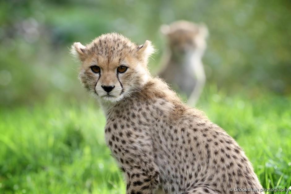 拍摄野生动物并不是一件一蹴而就的事情,对拍摄者和器材的要求都比较高。很多人碰到野生动物的时候,下意识就要给来一个特写,生怕虚焦。但是有一些摄影师喜欢讲自然环境交代清楚,他们拍摄的野生动物摄影中,风光的成分也不小,更难的是要将动物和环境融合在一起,构成一张和谐有意境的画面。   下面这些作品就做到了这一点,并记录了动物是时候的萌态,看起来非常可爱,值得你驻足欣赏。   screen.