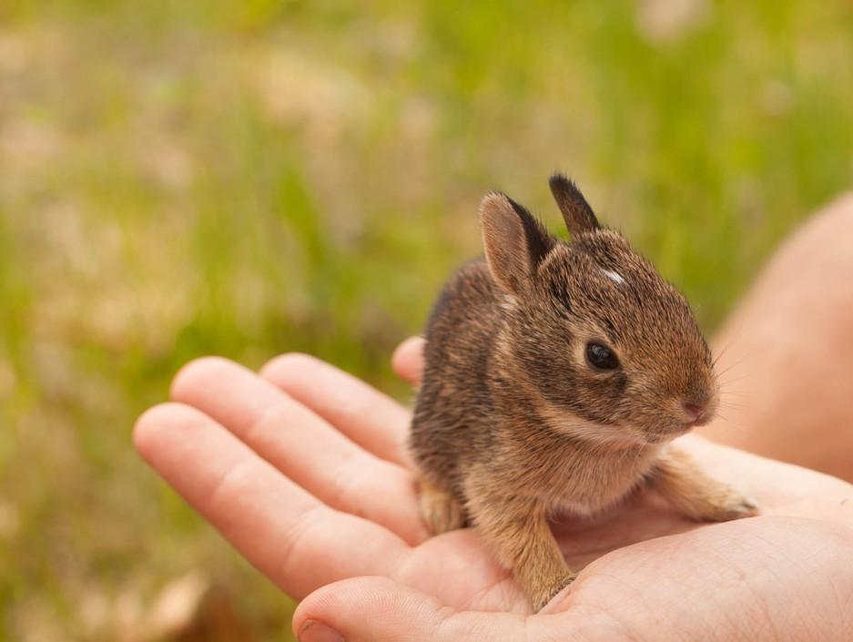 动物小兔子萌_