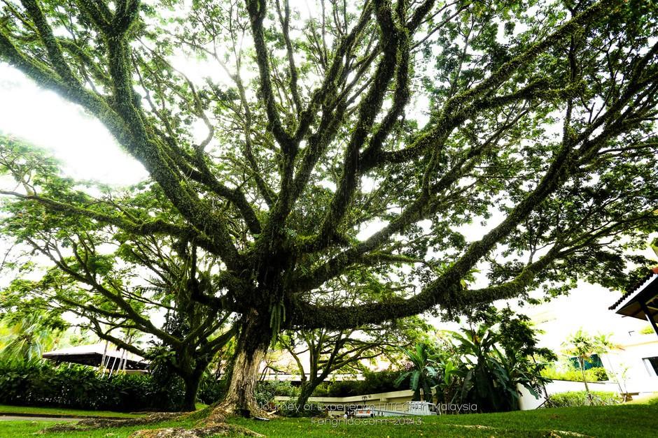 蒼天大樹和參天大樹意思上有什么不同?