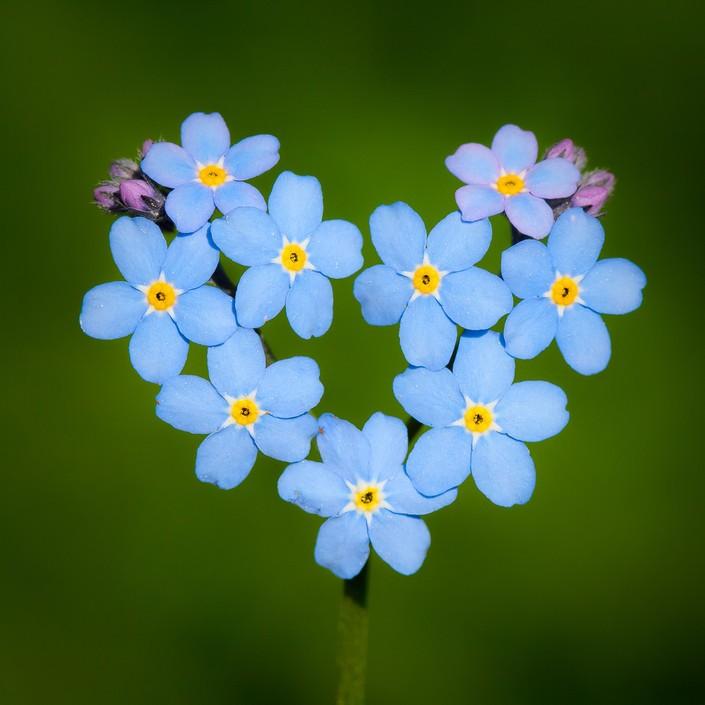 """来自大自然的爱 隐匿于世界之中的""""心"""" 组图"""