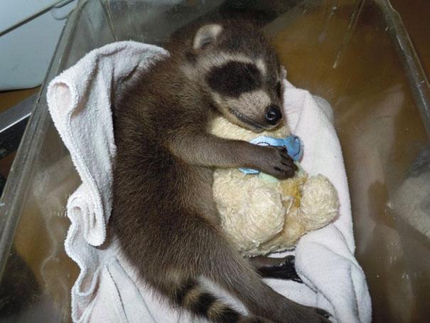 24张小动物抱玩偶的超可爱睡姿