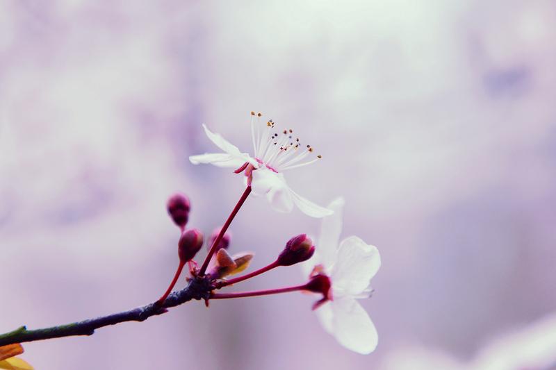 紫霞仙子.jpg