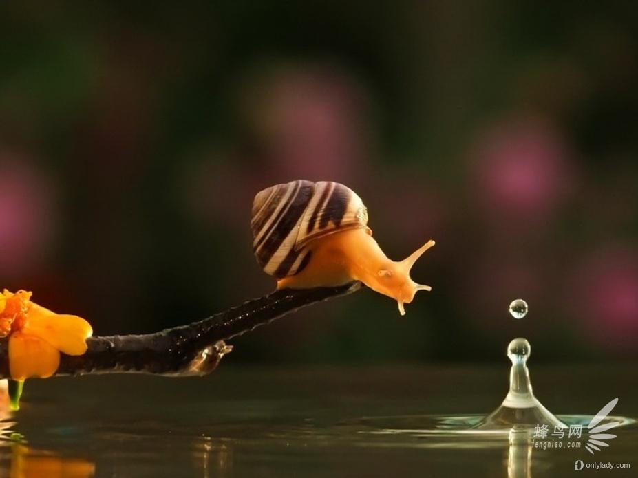 镜头下的蜗牛情人 融化人心的动物摄影 组图