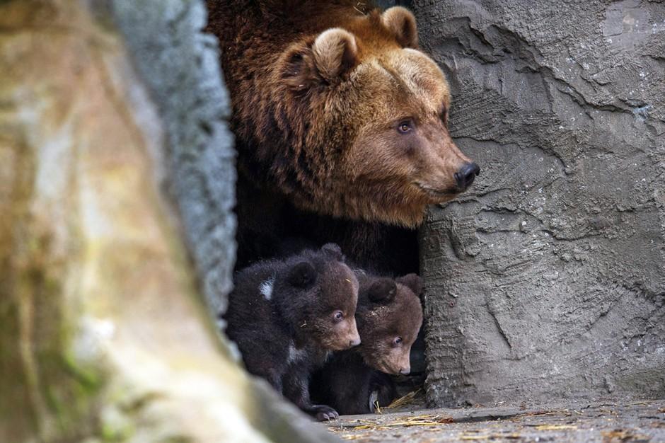 看完心情好:2014全球动物宝宝萌图汇总套图-第6张