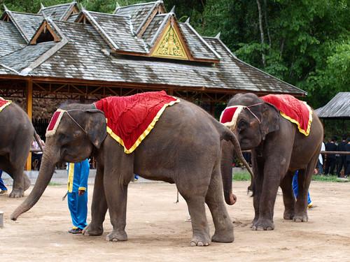 但之后的大象马戏表演还是给了我们很大的安慰