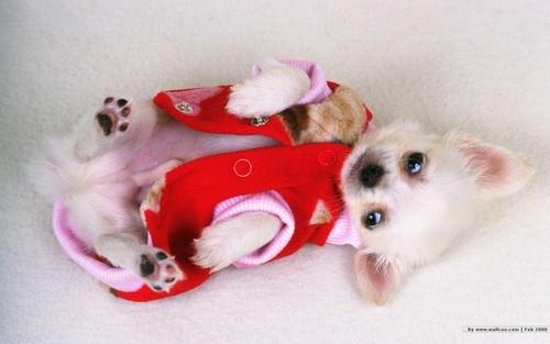 1440×900可爱小狗壁纸      目前小动物的壁纸在网络上十分流行,今天
