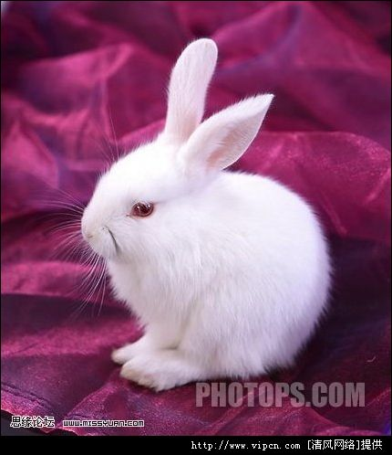 ps免抠图兔子透明素材