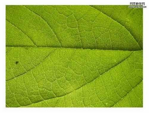树叶素材转换为3d质感叶子,主要用到photoshop的透视变形以及贝塞尔